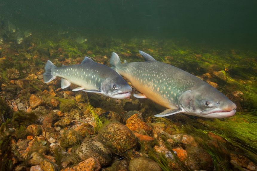 ПОРА рассказали о самой полезной рыбе в мире