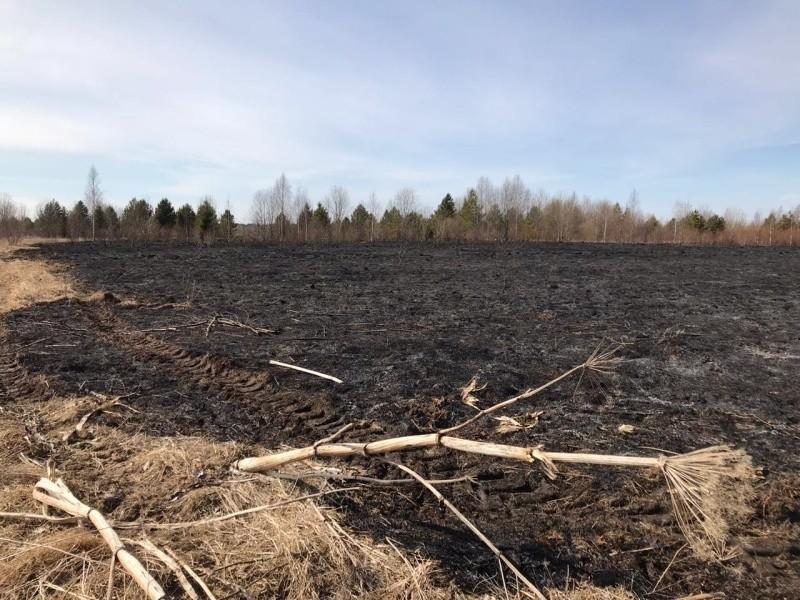 Из-за пала травы в Красноборском районе сгорела мертвая деревня